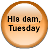 His dam, Tuesday
