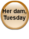 Her dam, Tuesday
